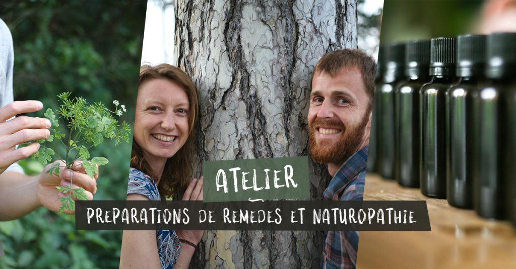 Stage naturopathie, herboristerie et plantes sauvages