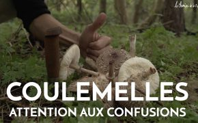 coulemelles attention aux confusions